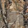 Плёнка камуфляж - Деревья А007