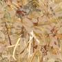 Плёнка камуфляж - Заросли камыша А020